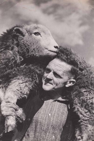 herdwick tom storey shepherd